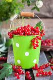 Fresh redcurrant in a bucket