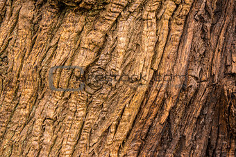 Old tree wood texture