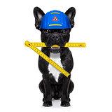 handyman  hammer dog