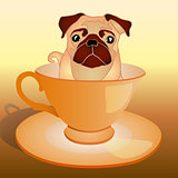 dog in the cup