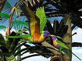 Rainbow Lorikeet Parrots