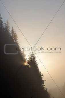 Foggy morning summer landscape with fir tree