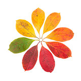 Autumn Color Symbol