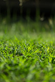 Depth of field of green grass