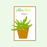 Aloe vera plant in brown pot