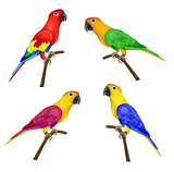 Set of beautiful colorful parrots isolated on white background-