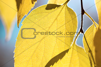 Autumn leaves against blue sky - fall season background