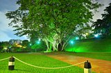 Big tree at a park by night