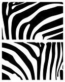 background zebra