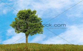 green lonely tree growing in a field