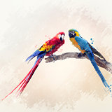 Two Parrots Watercolor