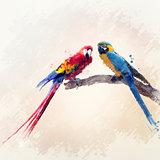 Two Parrots Watercolor