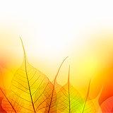 Leaves  Border of  Autumn color season on white background