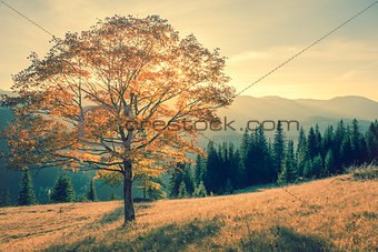 Autumn tree in mountains landscape,  vintage