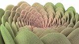 Spiral flower fluffy succulent
