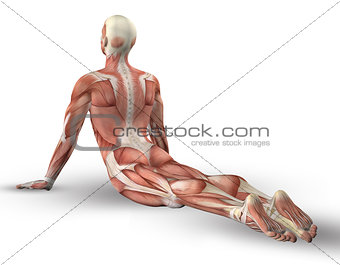 3D male figure with muscle map in yoga pose