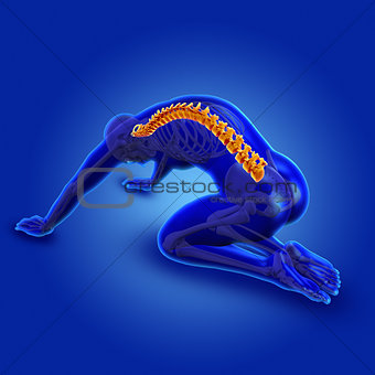 3D blue medical male figure with spine highlighted