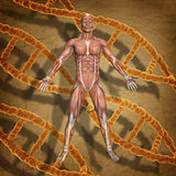 3D male medical figure on a grunge medical background with DNA s