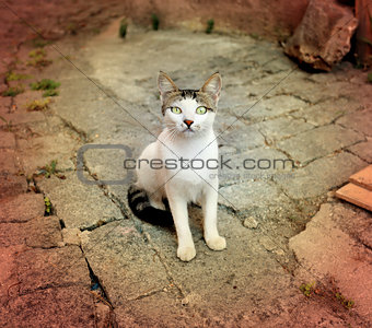 Beautiful cat sitting on the ground