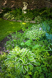 Shady garden with perennials