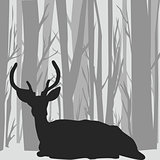 Deer stag silhouette  in forest landscape