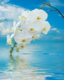 White Orchid on Surface Rippled of water and sky background