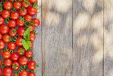 Ripe cherry tomatoes and basil