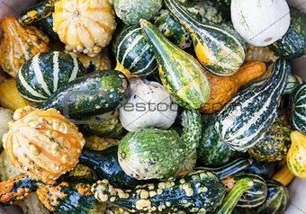 Close up of autumn harvest