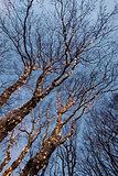 Illuminated tree