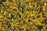 green yellow leafy background
