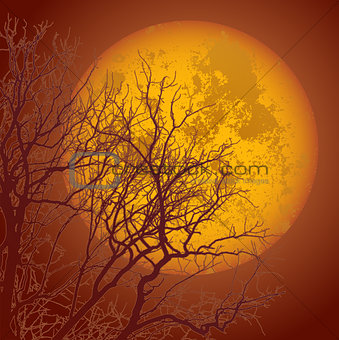 autumn branches and the moon01