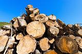 Wooden Logs on Blue Sky