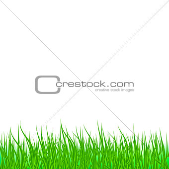 Lawn green grass abstract natural background