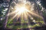 Woods sunlight