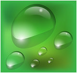 Vector water drops on green background