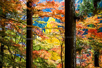 Beautiful colors have autumn, Japan.