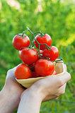 Farmer Showing Organic Tomatoes