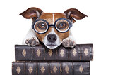 dog reading books
