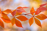Autumn leaves background, horizontal background