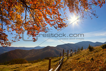 Autumn Landscape in Mountains Valley
