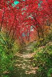 Pathway in Bakota Park