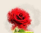 Grunge Rose image
