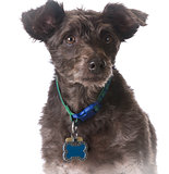dog wearing a collar with a name tag