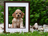 picture perfect puppy