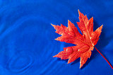 Autumn Leaf On Blue Background
