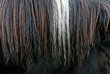 Close up of horsehair