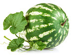 Fresh ripe watermelon with green leaves