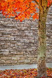 Beautiful Autumn Tree With Brick Background
