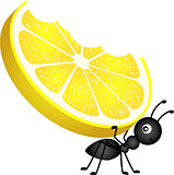 Ant carrying a lemon