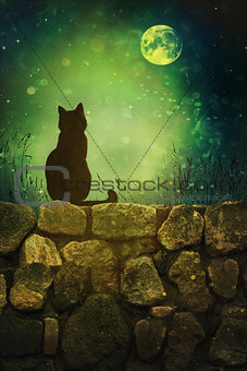 Black cat on rock wall Halloween night